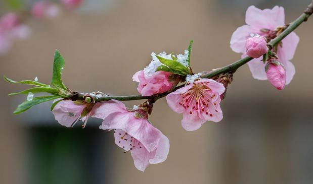 Не случившаяся весна